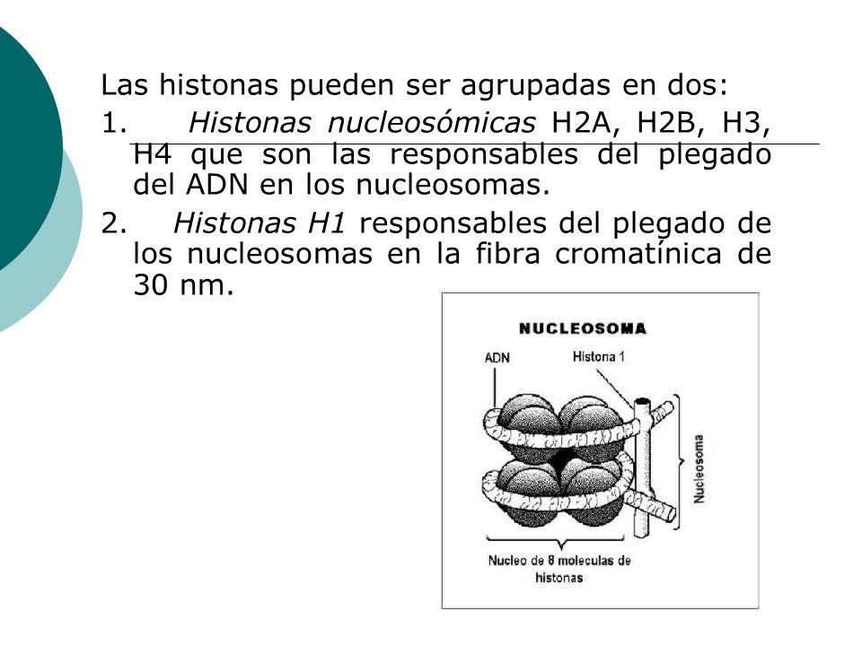 Las histonas pueden ser agrupadas en dos: