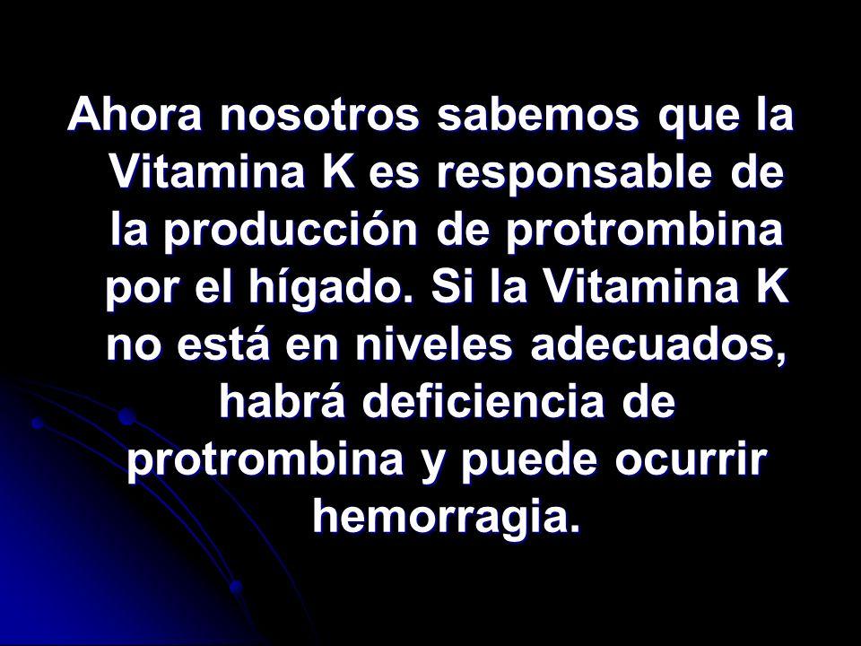 Ahora nosotros sabemos que la Vitamina K es responsable de la producción de protrombina por el hígado.