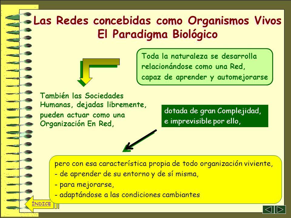 Las Redes concebidas como Organismos Vivos El Paradigma Biológico
