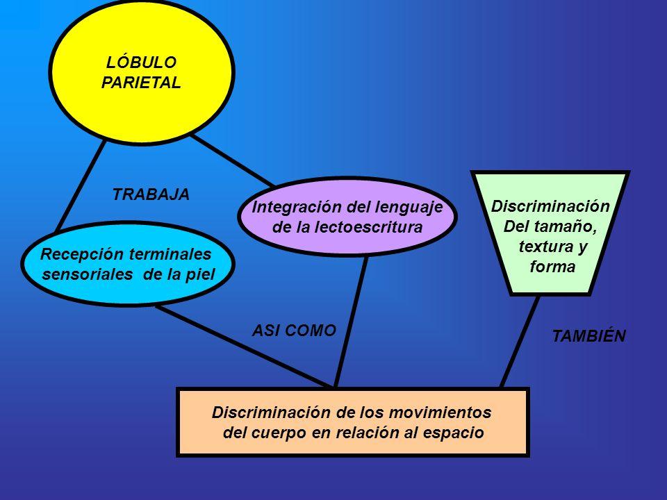 Integración del lenguaje de la lectoescritura