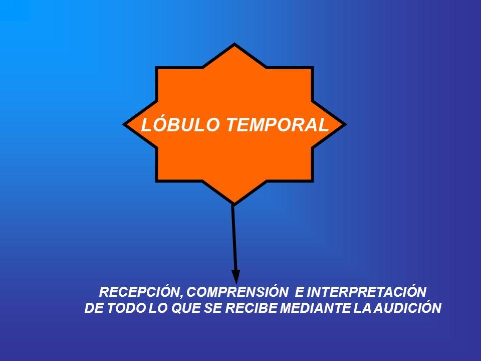 LÓBULO TEMPORAL RECEPCIÓN, COMPRENSIÓN E INTERPRETACIÓN