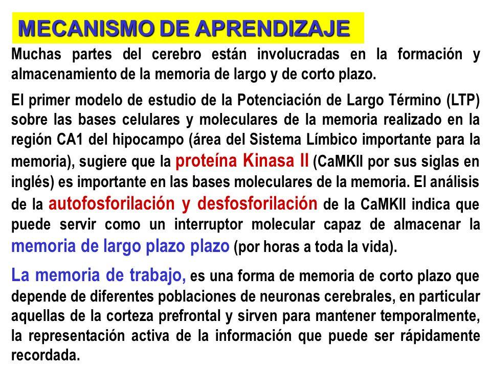 MECANISMO DE APRENDIZAJE