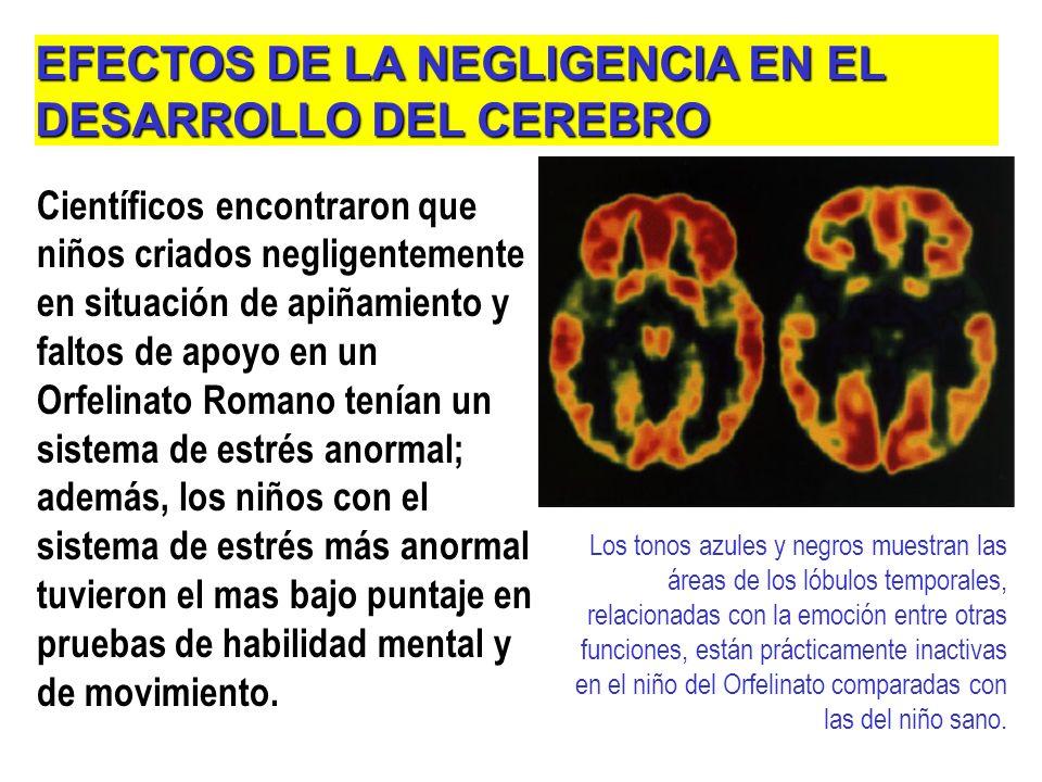 EFECTOS DE LA NEGLIGENCIA EN EL DESARROLLO DEL CEREBRO
