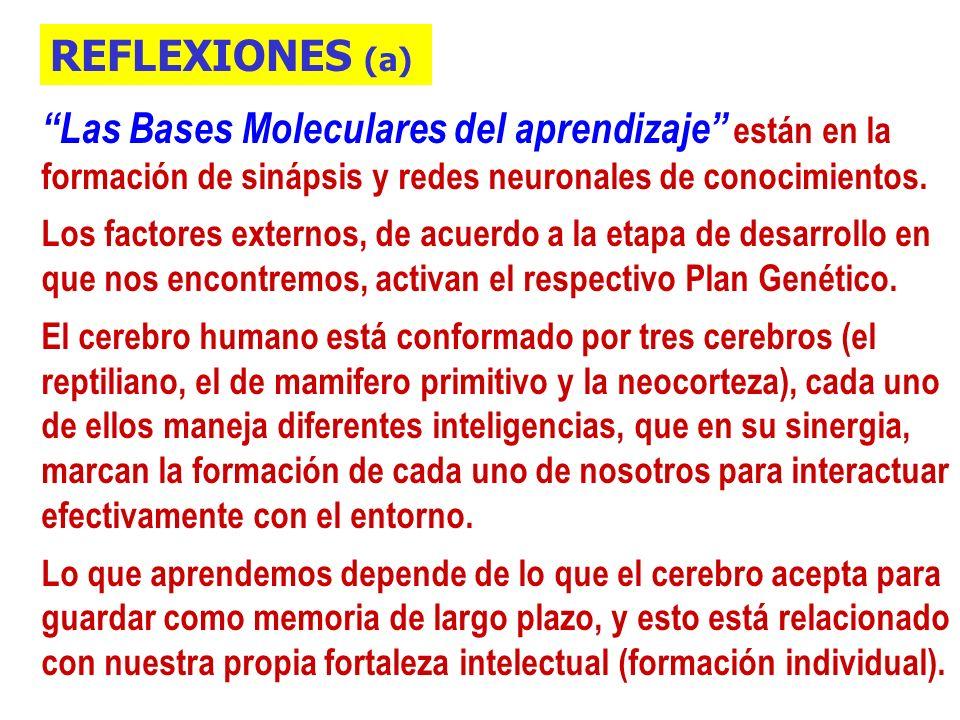 REFLEXIONES (a) Las Bases Moleculares del aprendizaje están en la formación de sinápsis y redes neuronales de conocimientos.