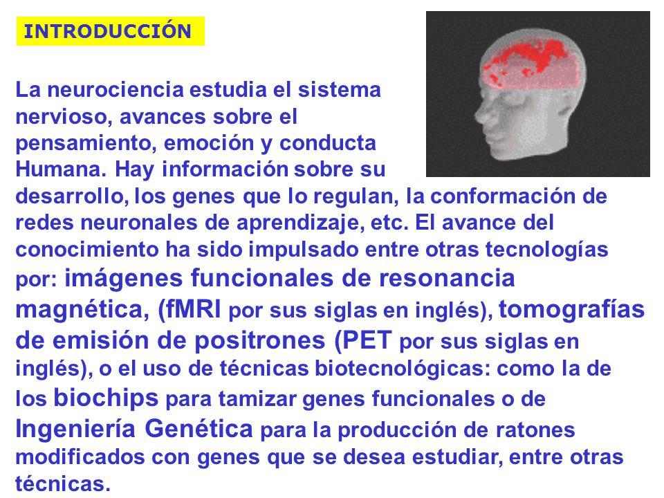 La neurociencia estudia el sistema nervioso, avances sobre el