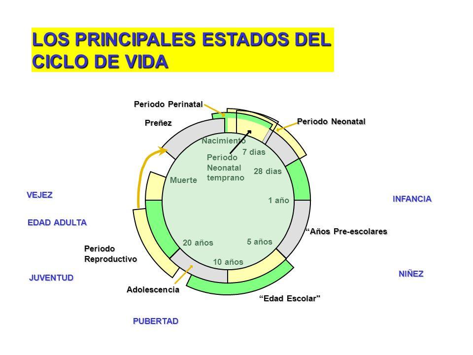 LOS PRINCIPALES ESTADOS DEL CICLO DE VIDA
