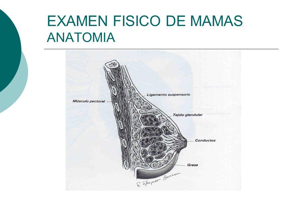 EXAMEN FISICO DE MAMAS ANATOMIA