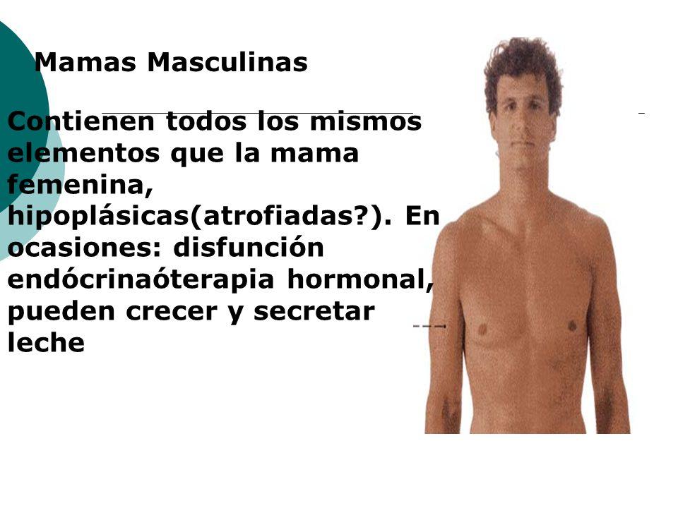 Mamas Masculinas
