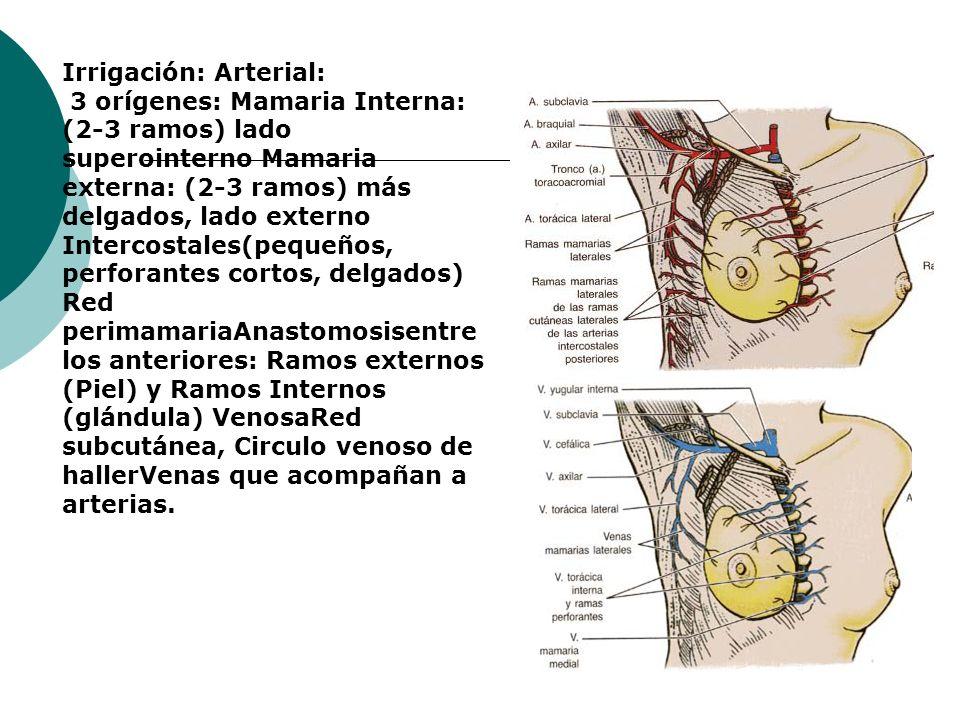 Irrigación: Arterial: