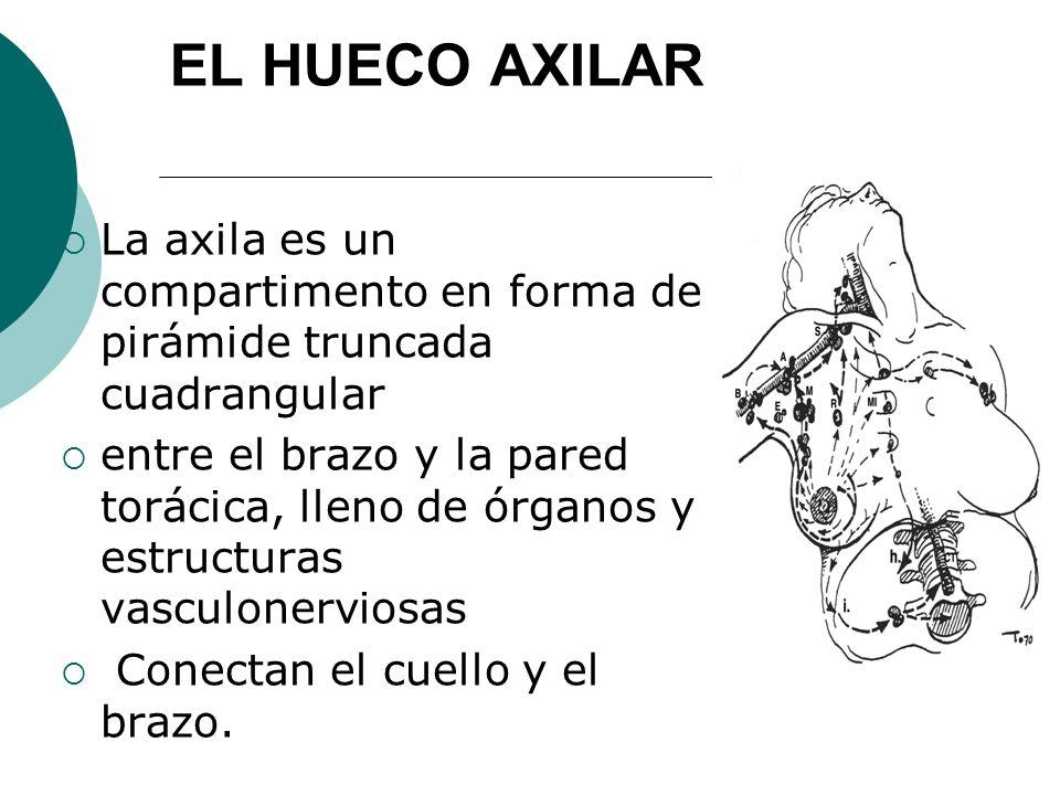 EL HUECO AXILAR La axila es un compartimento en forma de pirámide truncada cuadrangular.