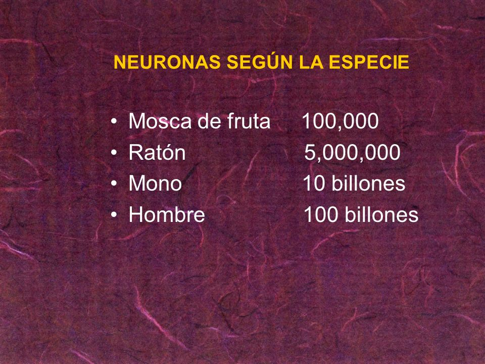 Mosca de fruta 100,000 Ratón 5,000,000 Mono 10 billones