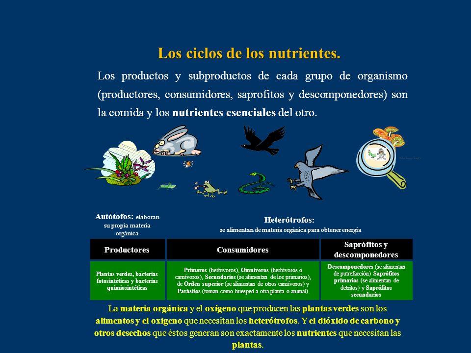 Los ciclos de los nutrientes.