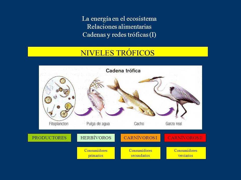 La energía en el ecosistema Relaciones alimentarias Cadenas y redes tróficas (I)