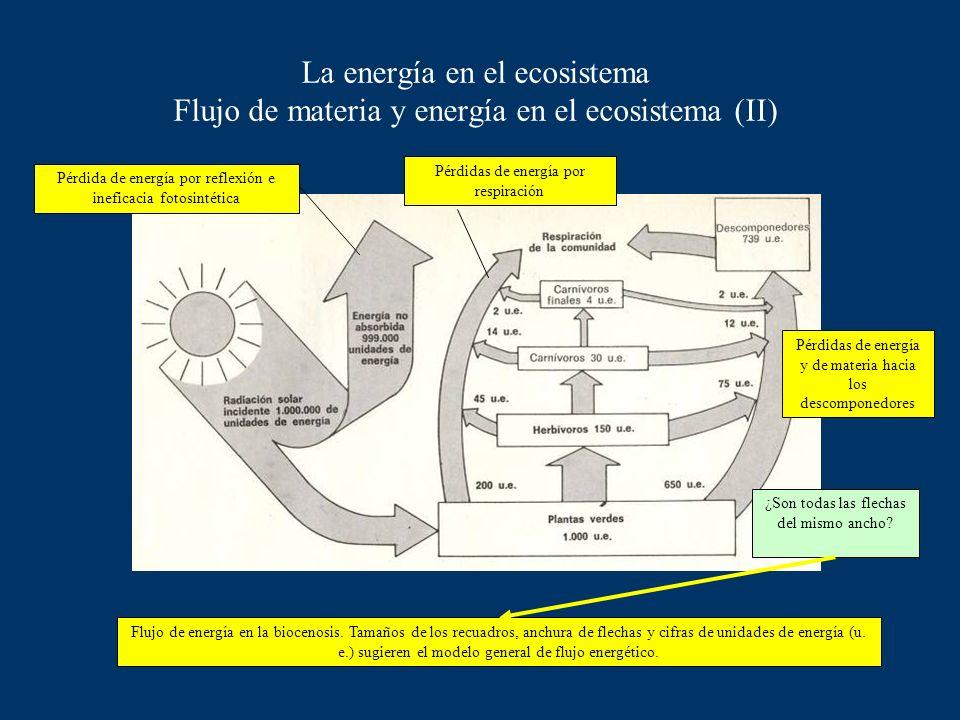 La energía en el ecosistema Flujo de materia y energía en el ecosistema (II)