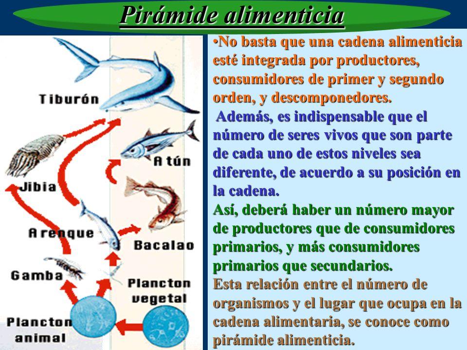 Pirámide alimenticiaNo basta que una cadena alimenticia esté integrada por productores, consumidores de primer y segundo orden, y descomponedores.