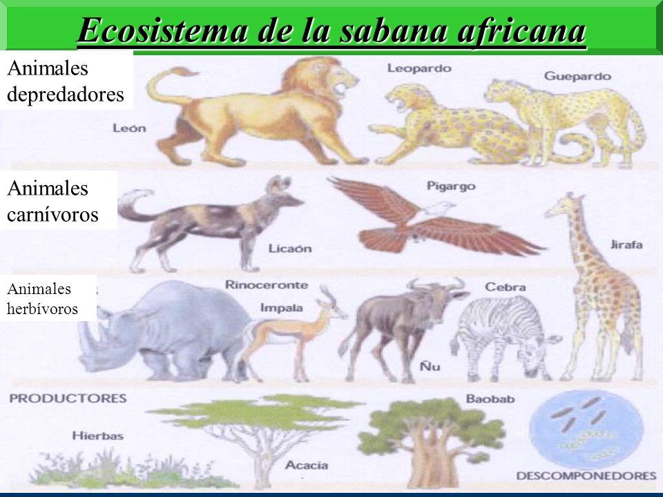 Ecosistema de la sabana africana
