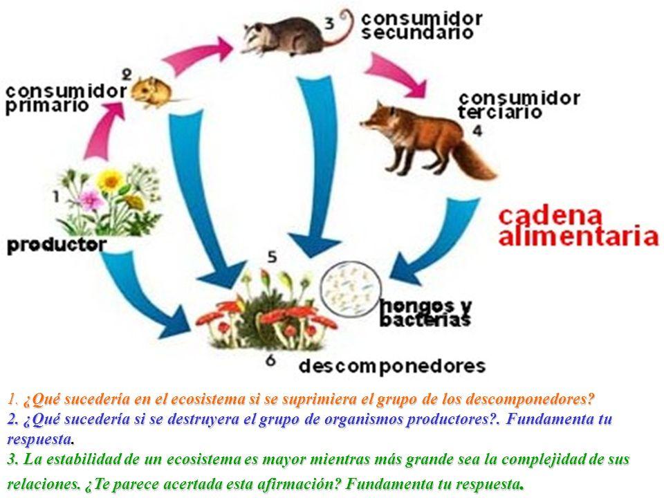 1. ¿Qué sucedería en el ecosistema si se suprimiera el grupo de los descomponedores.