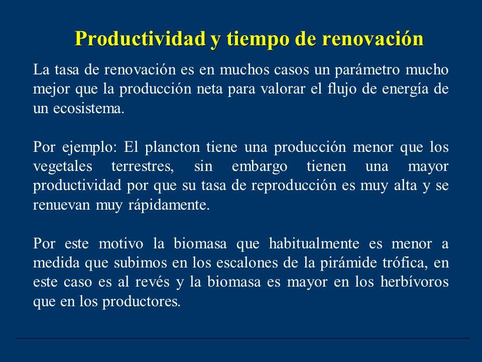Productividad y tiempo de renovación