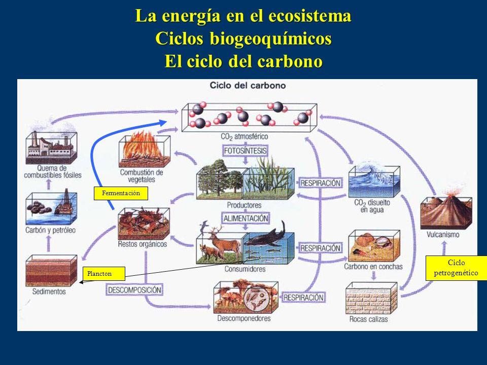 La energía en el ecosistema Ciclos biogeoquímicos El ciclo del carbono