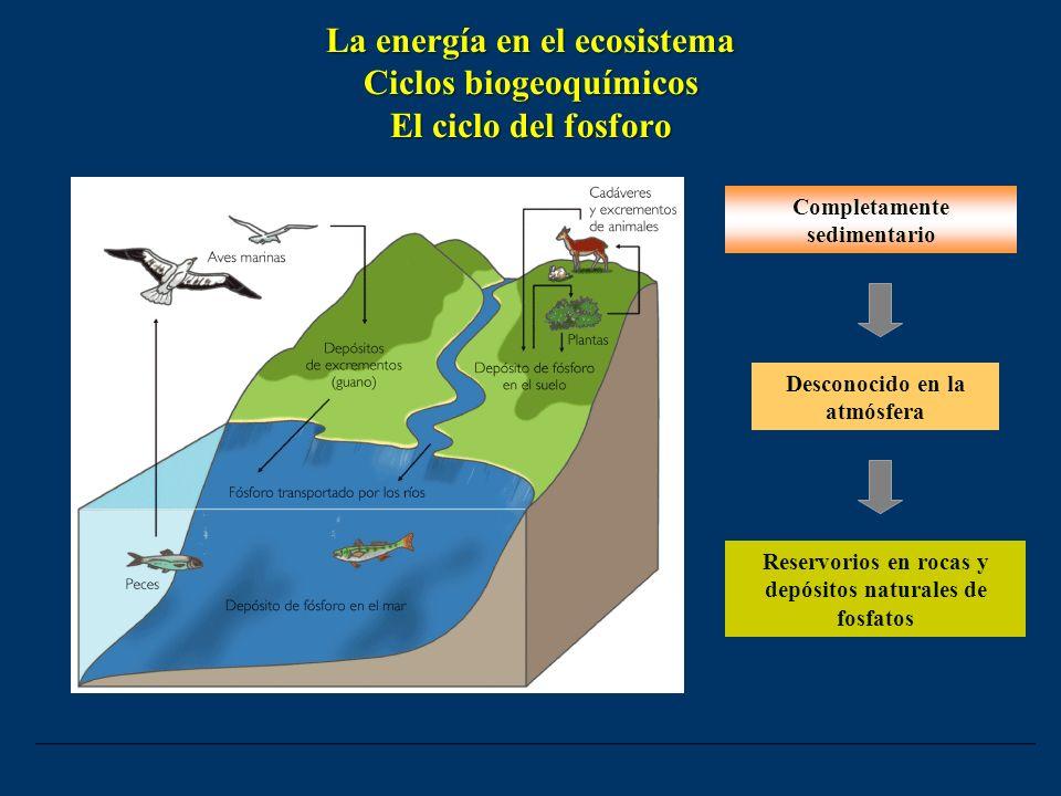 La energía en el ecosistema Ciclos biogeoquímicos El ciclo del fosforo