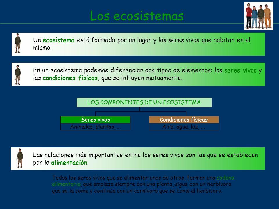LOS COMPONENTES DE UN ECOSISTEMA