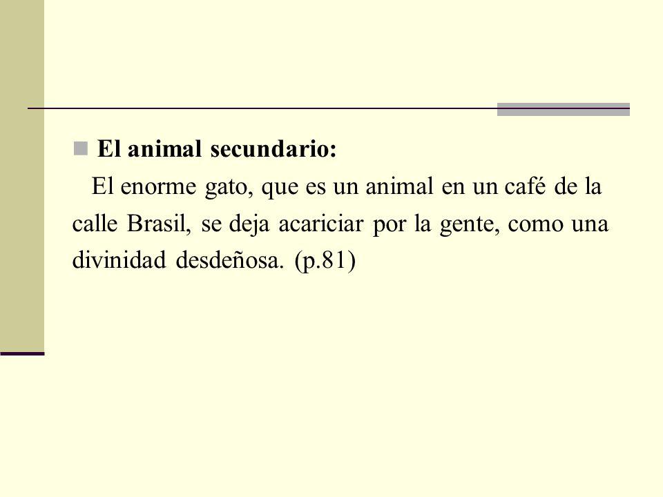 El animal secundario: El enorme gato, que es un animal en un café de la. calle Brasil, se deja acariciar por la gente, como una.
