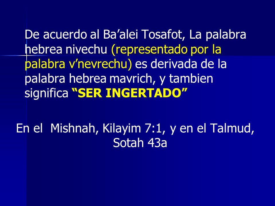 En el Mishnah, Kilayim 7:1, y en el Talmud, Sotah 43a