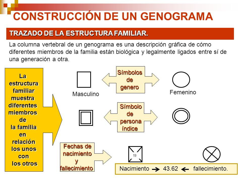 CONSTRUCCIÓN DE UN GENOGRAMA