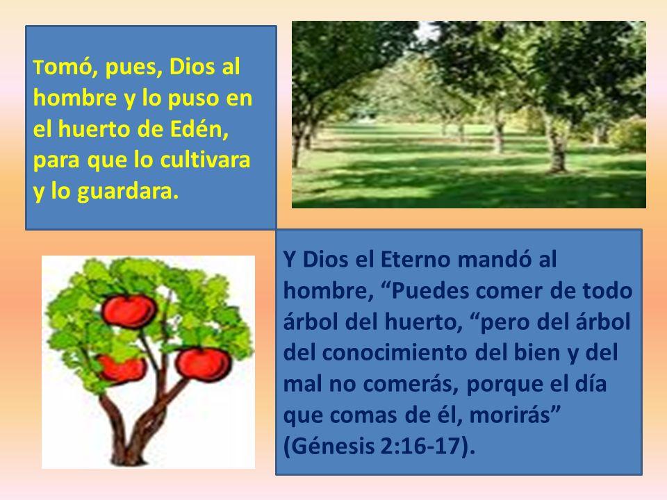 Tomó, pues, Dios al hombre y lo puso en el huerto de Edén, para que lo cultivara y lo guardara.