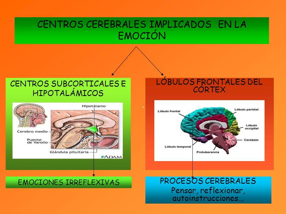 LÓBULOS FRONTALES DEL CÓRTEX