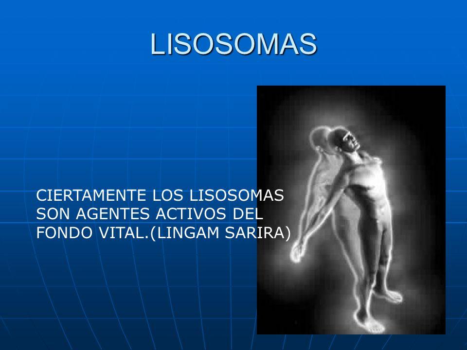 LISOSOMAS CIERTAMENTE LOS LISOSOMAS SON AGENTES ACTIVOS DEL