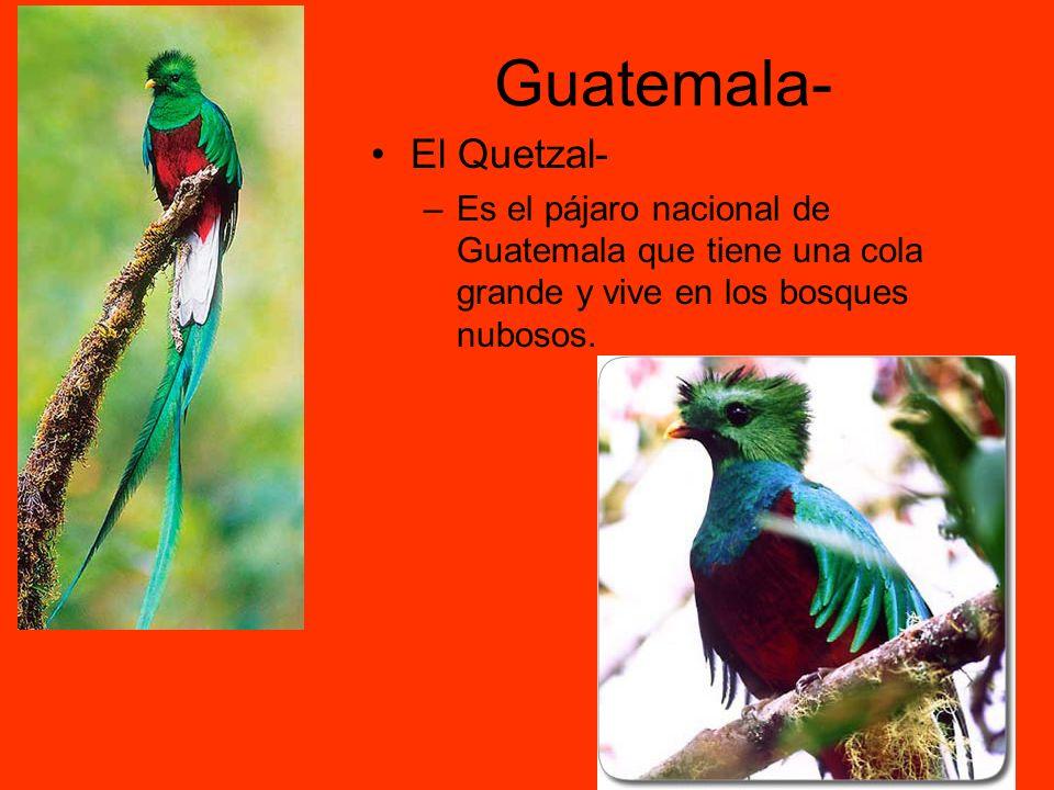 Guatemala- El Quetzal-