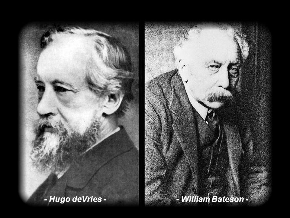 - Hugo deVries - - William Bateson -