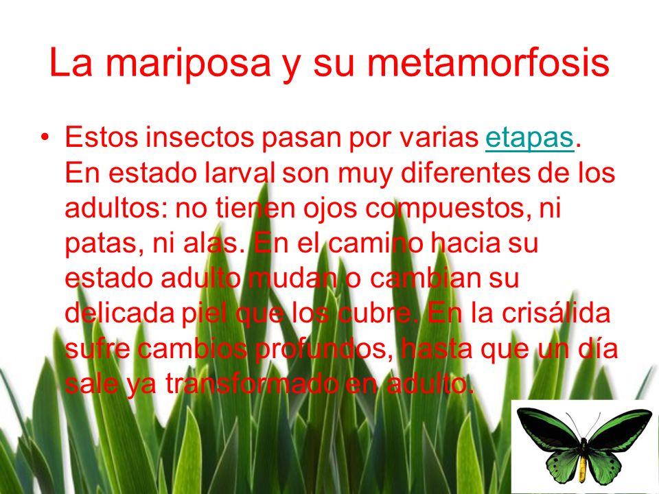 La mariposa y su metamorfosis