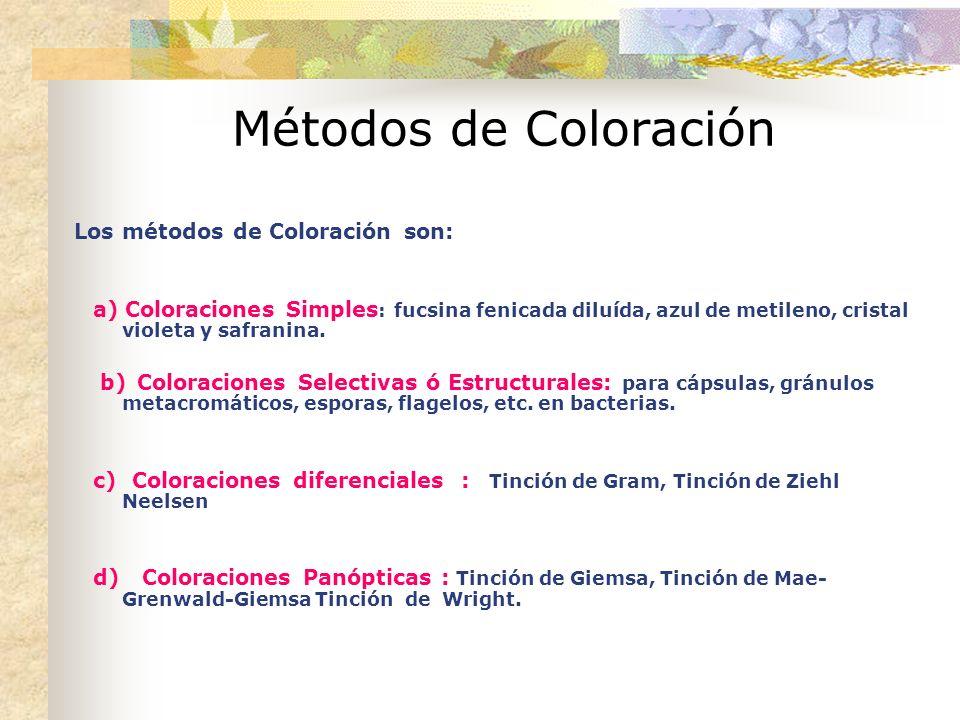 Métodos de Coloración Los métodos de Coloración son: