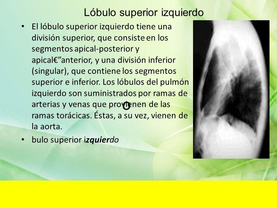 Lóbulo superior izquierdo