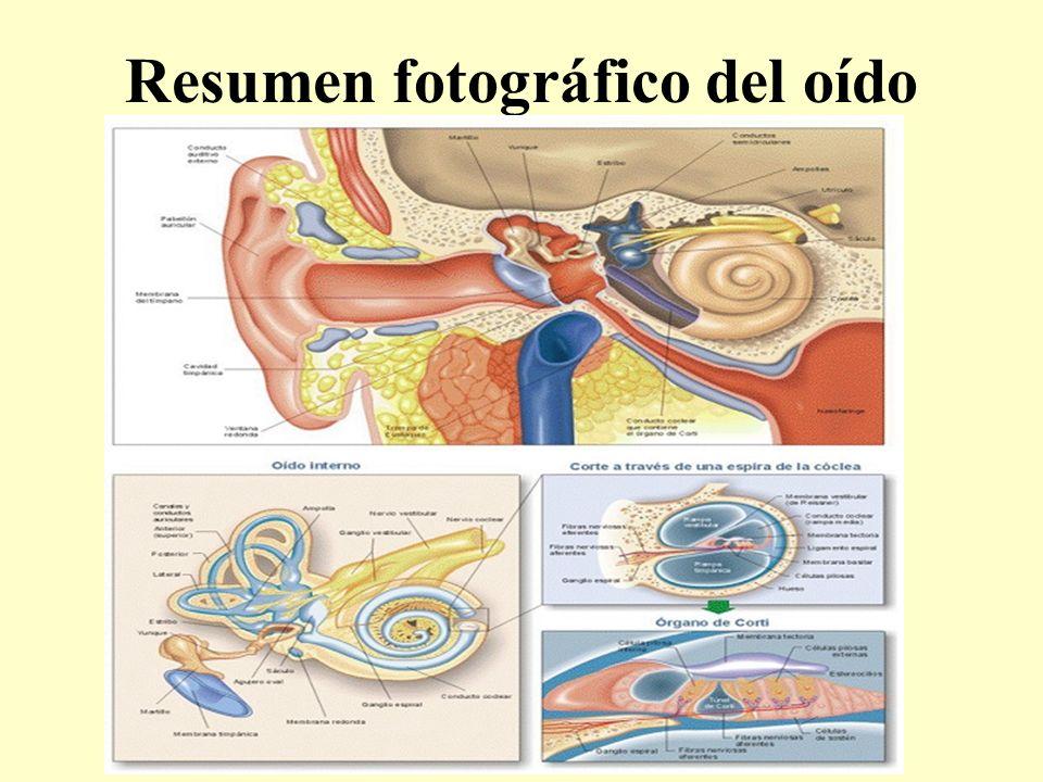 Resumen fotográfico del oído