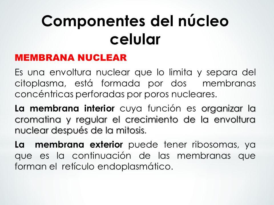 Componentes del núcleo celular