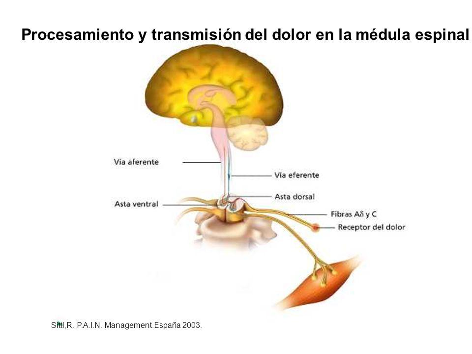 Procesamiento y transmisión del dolor en la médula espinal