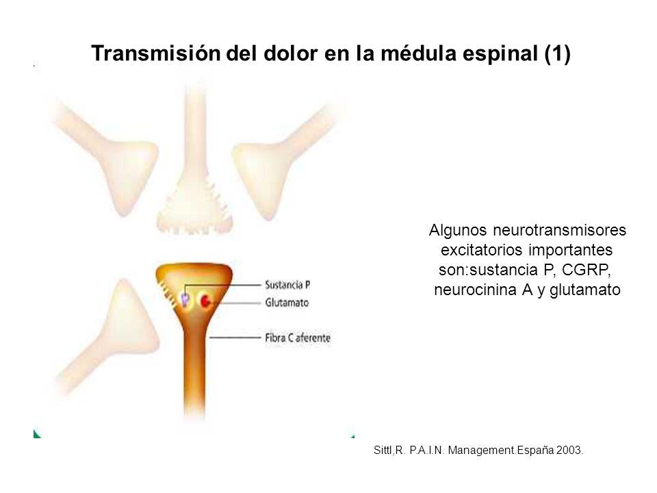 Transmisión del dolor en la médula espinal (1)