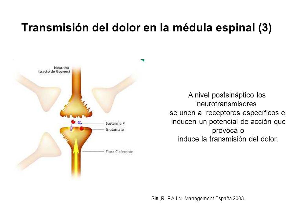 Transmisión del dolor en la médula espinal (3)