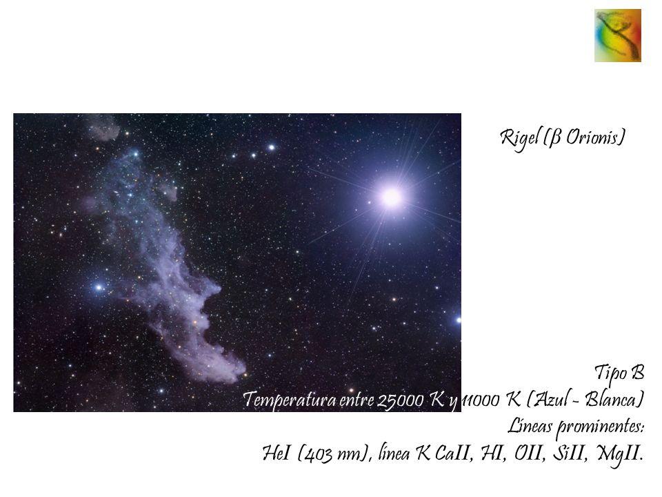 Rigel (β Orionis) Tipo B. Temperatura entre 25000 K y 11000 K (Azul - Blanca) Líneas prominentes: