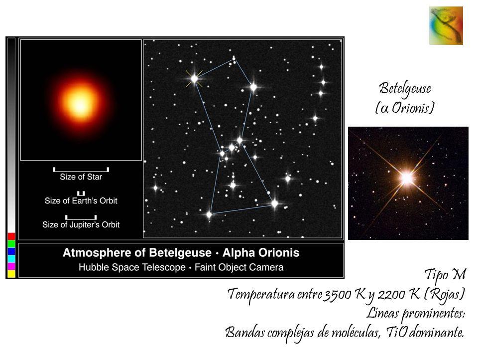 Betelgeuse (α Orionis) Tipo M.