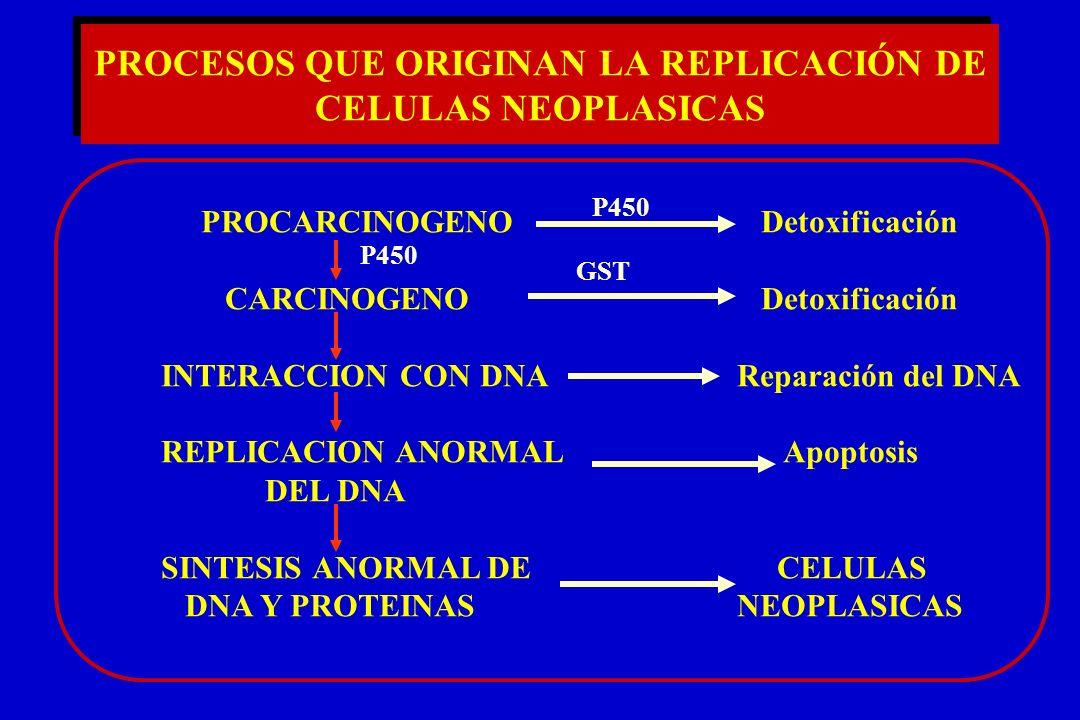 PROCESOS QUE ORIGINAN LA REPLICACIÓN DE CELULAS NEOPLASICAS