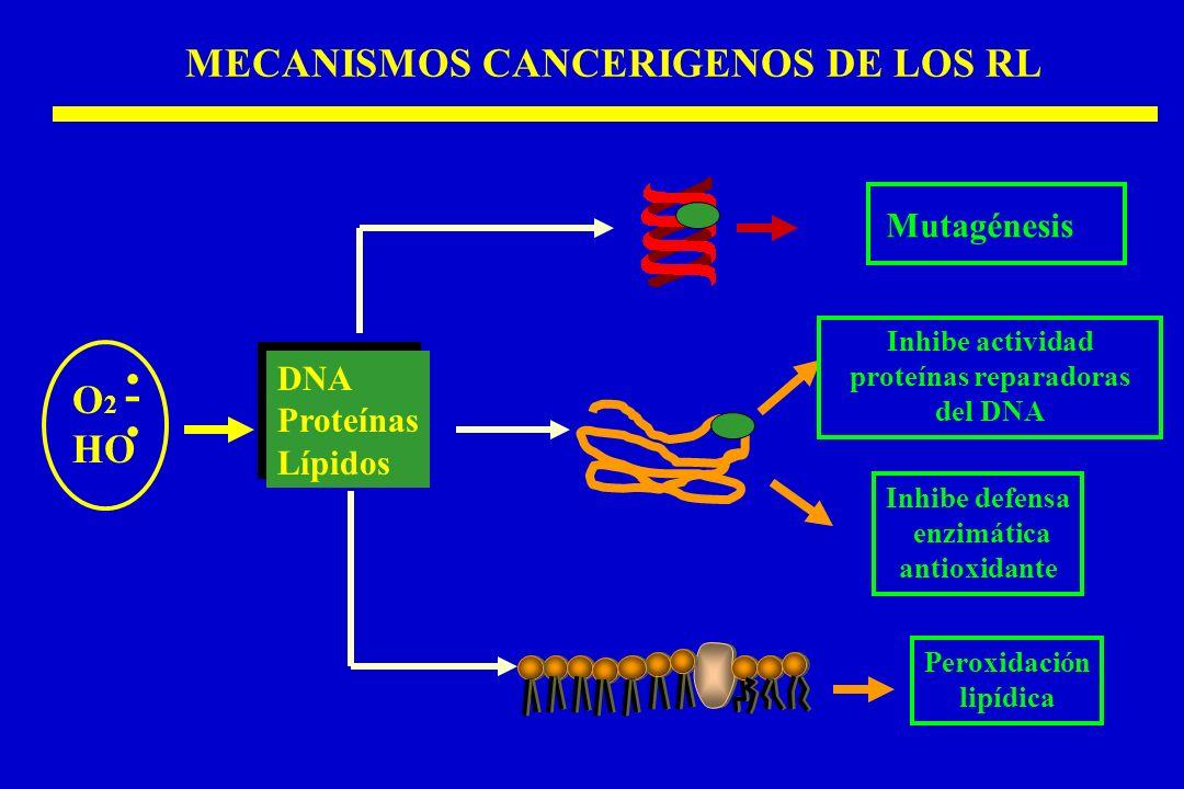 MECANISMOS CANCERIGENOS DE LOS RL