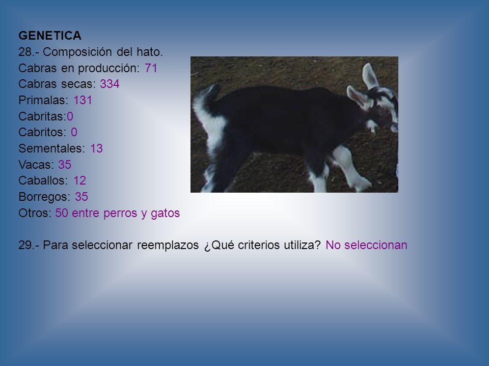 GENETICA28.- Composición del hato. Cabras en producción: 71. Cabras secas: 334. Primalas: 131. Cabritas:0.