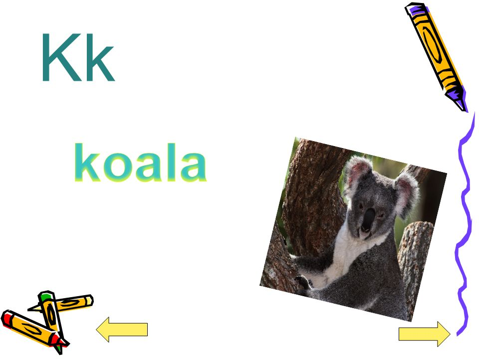 Kk koala
