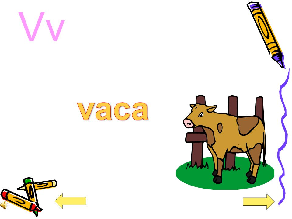 Vv vaca