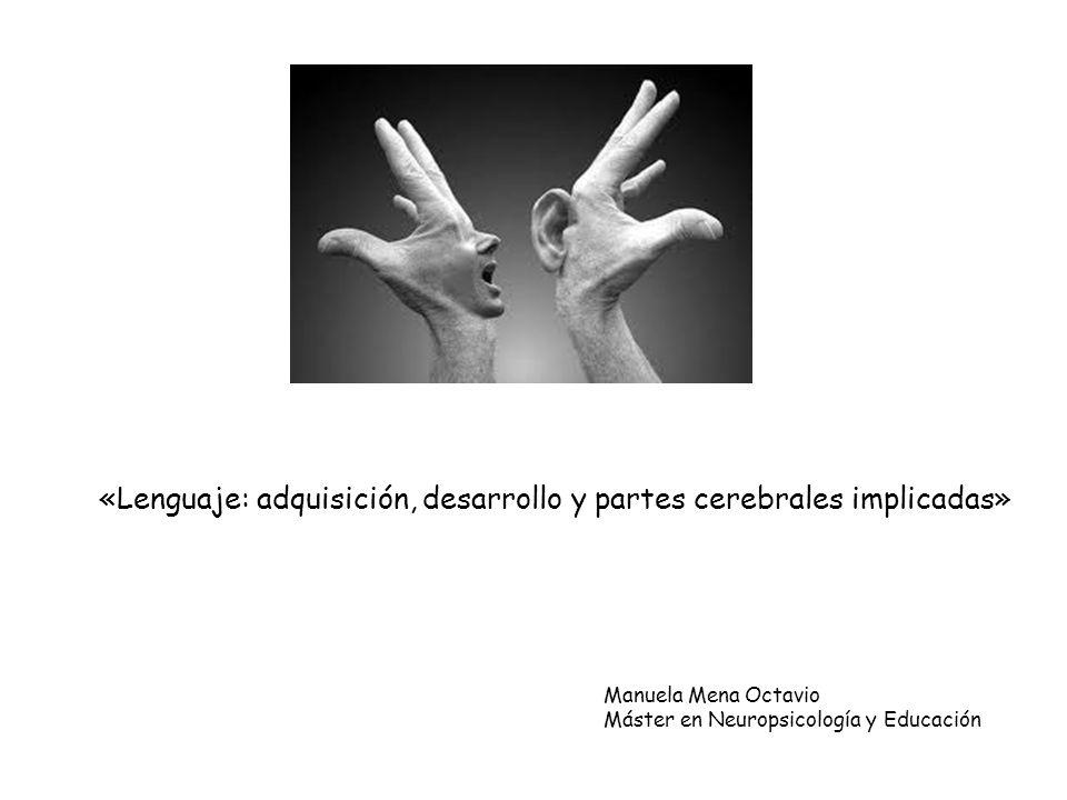 «Lenguaje: adquisición, desarrollo y partes cerebrales implicadas»