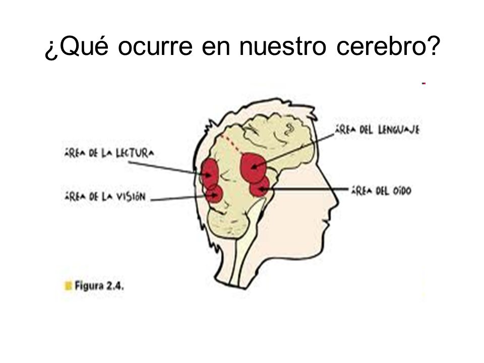 ¿Qué ocurre en nuestro cerebro